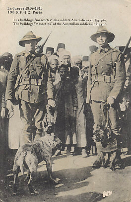 ANZACs IN Egypt, 1915 - Australian Soldiers with Bulldog Mascots, likely ready for deployment to Gallipoli. The message on the reverse is dated June 2, 1915; the landing at Gallipoli began on April 25, 1915.