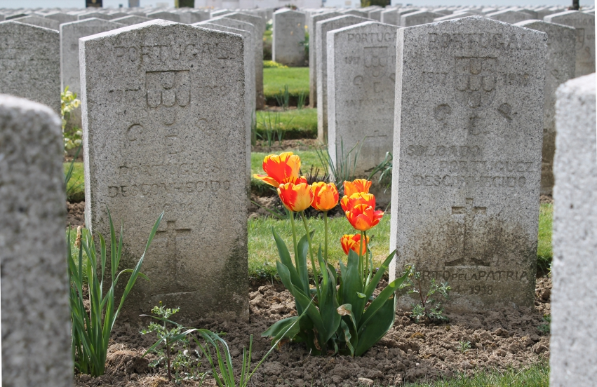 Tulips among the headstones in the Portuguese Cemetery in Neuve Chapelle, France. Portugal joined the Entente Allies in 1917. They were on the front line in Operation Georgette, the German Lys Offensive, the second German drive of 1918. The Cemetery is across a field from the Indian Memorial. Nearby is the Laventie German Cemetery.